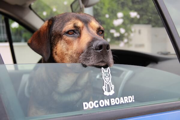 OP dog sticker on car