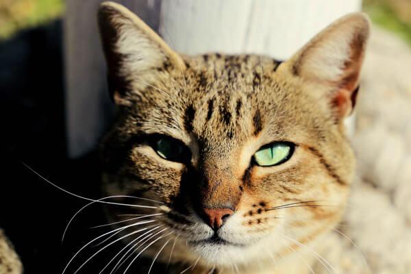 Un gato puede ser tu mejor amigo